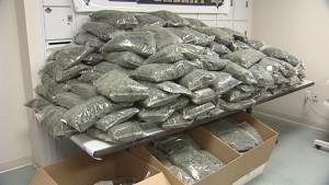 konfisziertes Marihuana